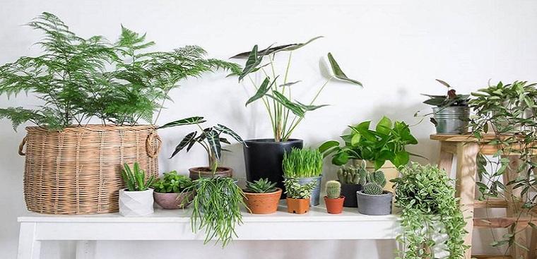Những loại cây trồng trong nhà sang trọng, dễ trồng, thu hút tài lộc