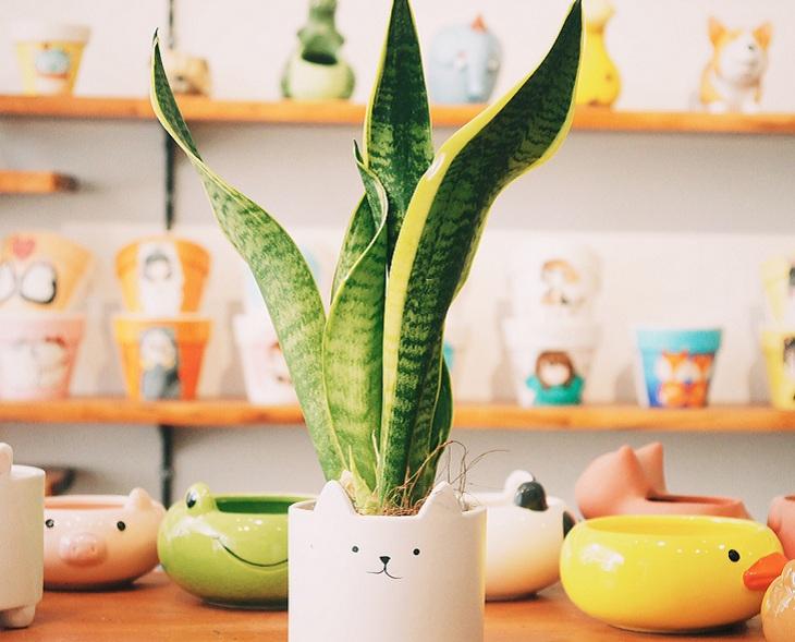 Những loại cây trồng trong nhà, sang trọng, hút tài lộc