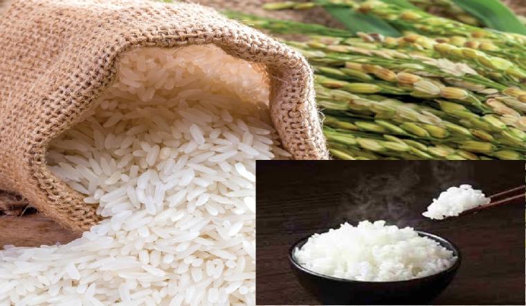 Gạo ST21, ST24, ST25 là gạo gì? Loại nào ngon hơn?