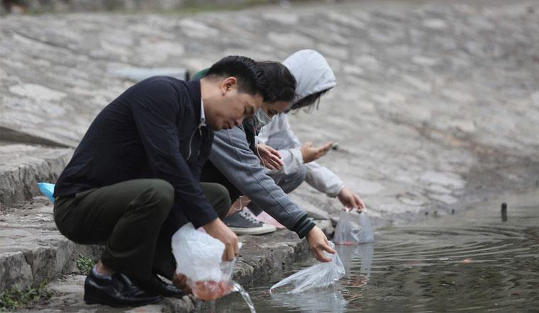 Dùng cá Koi thay cá chép để cúng ông Công ông Táo, đúng hay sai?