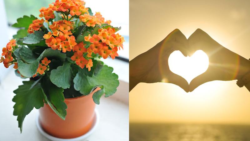 Cây sống đời tượng trưng cho sự bền bỉ trong tình yêu
