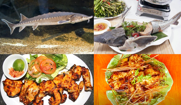 Tổng hợp các món ăn ngon từ cá tầm, dễ làm lại nhà