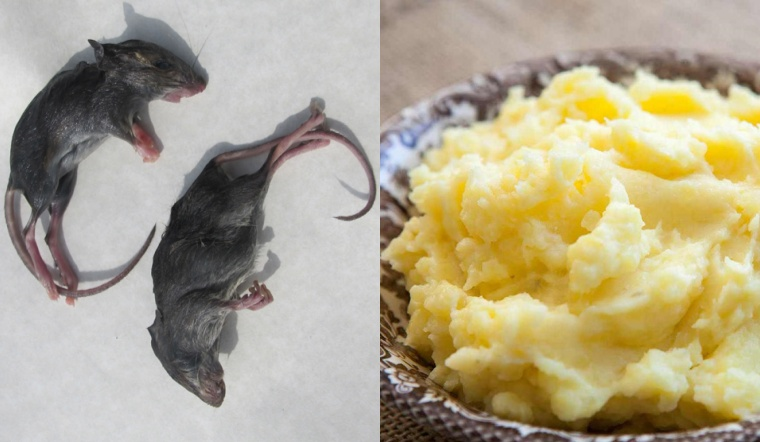 Trộn khoai tây với bột mì theo kiểu này, chẳng còn con chuột nào dám trú ở nhà bạn