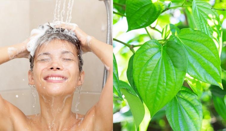 Tắm 5 loại lá này sau khi sinh, mẹ vừa sạch sẽ thơm tho lại chẳng sợ viêm nhiễm