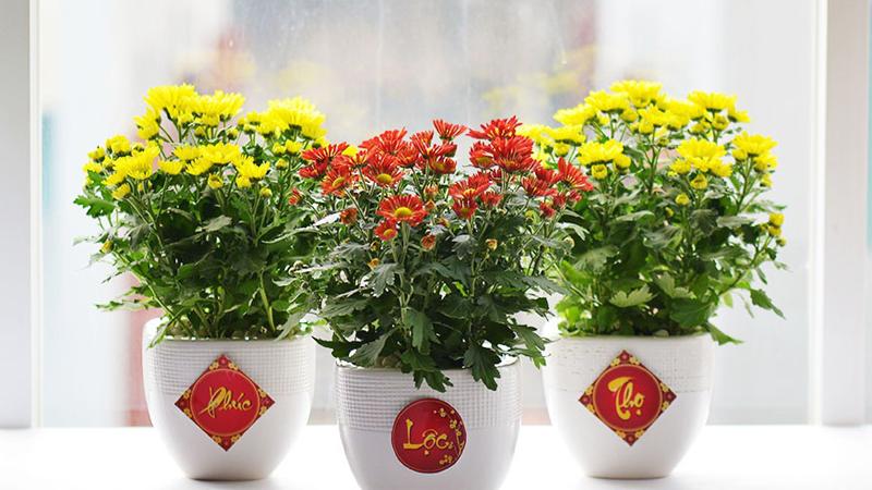 Trang trí nhà cửa ngày Tết với hoa tươi