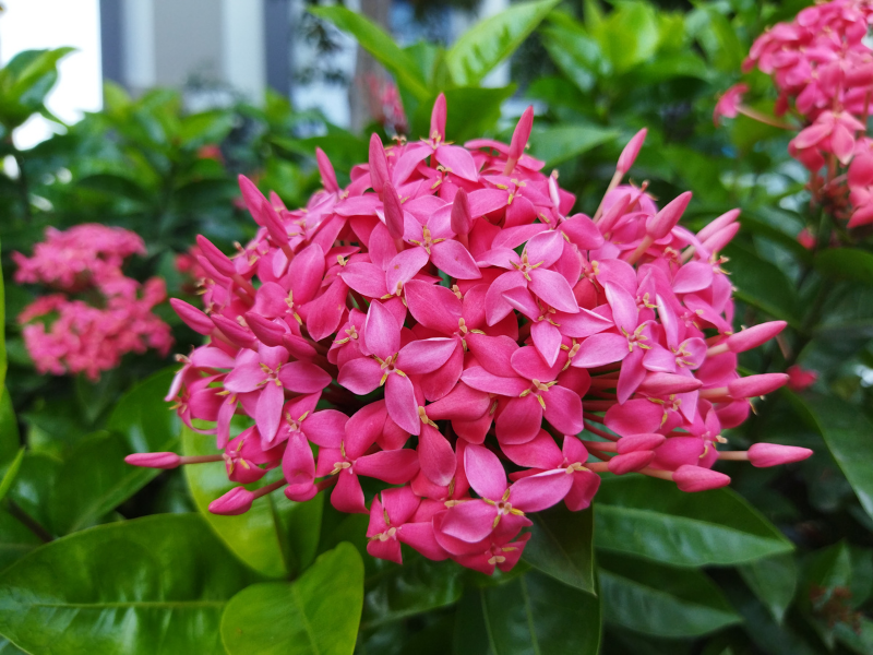 Ảnh chụp hoa ở chế độ tự động trong điều kiện đầy đủ sáng bằng Xiaomi Redmi 9T.