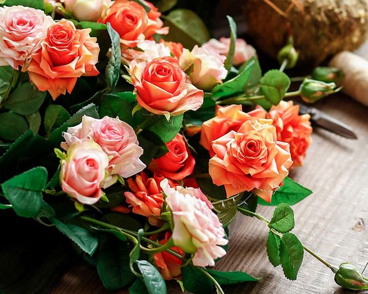 Hoa hồng tỷ muội