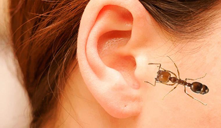 Kiến, côn trùng chui vào tai cần làm gì? Có nguy hiểm không?