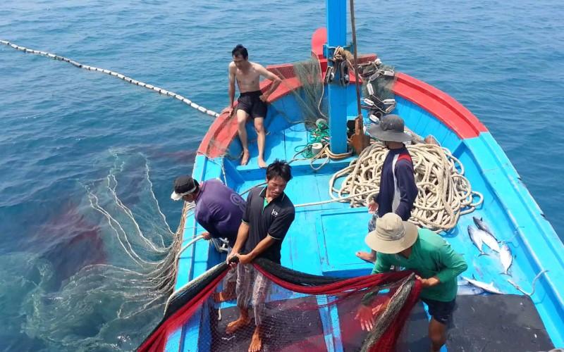 Sản lượng cá chình đa số đều là từ đánh bắt tự nhiên