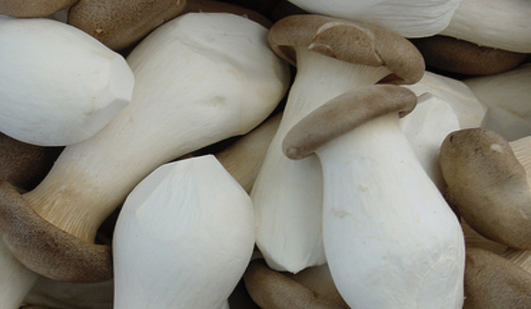 Bật mí cách chọn nấm đùi gà tươi ngon của người trồng nấm