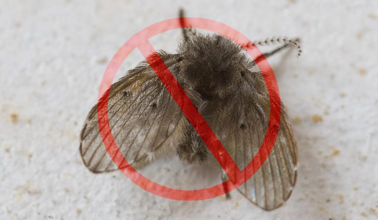4 cách diệt ruồi cống tận gốc trong nhà vệ sinh