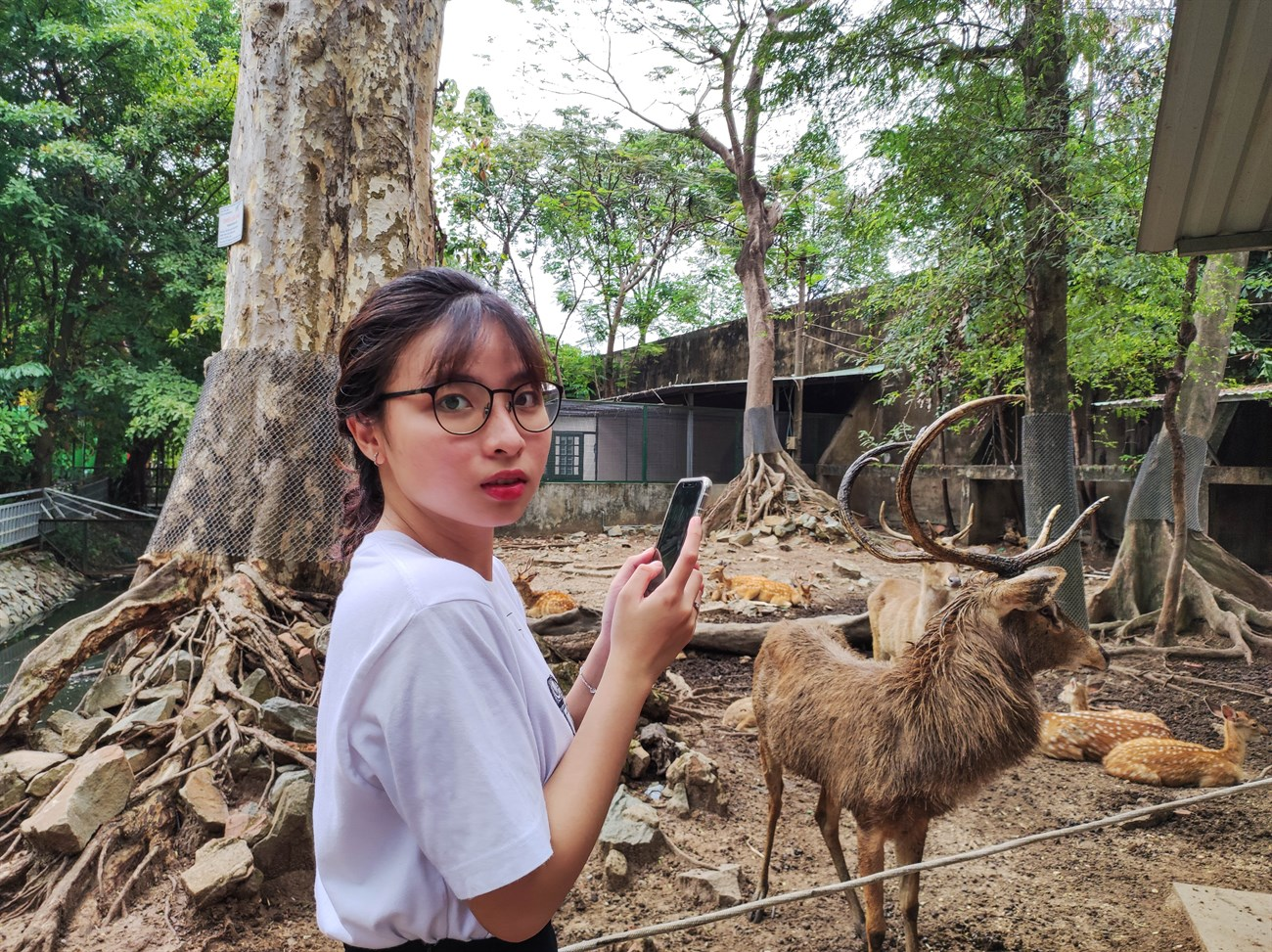 This is the face when seeing with my own eyes the long horn of the head deer