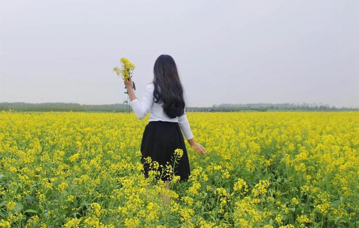 Cánh đồng hoa cải Thái Bình
