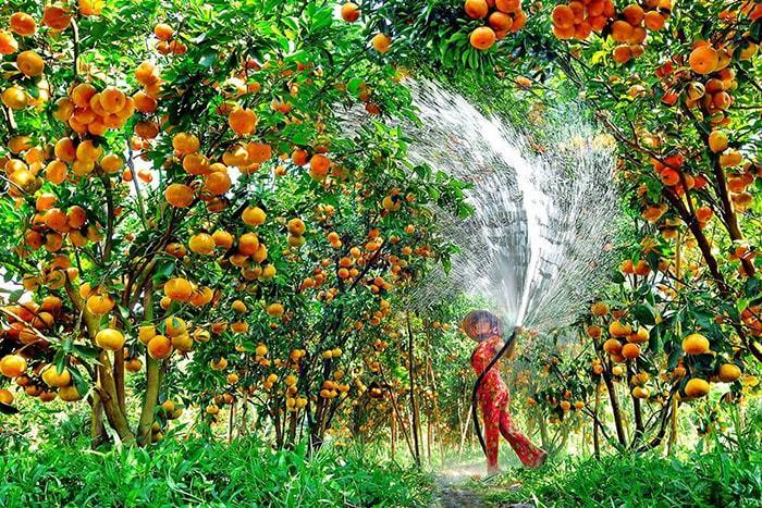 Vườn cây trái Vĩnh Kim