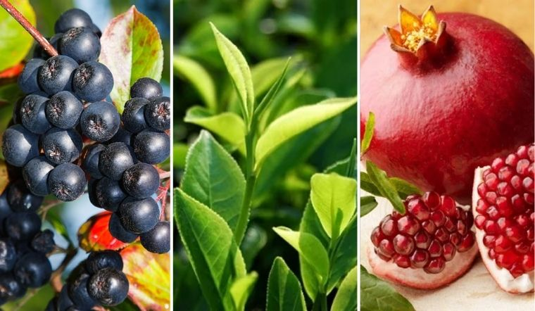 Khoa học chứng minh trà xanh và nước ép lựu có chất chống lại Covid-19