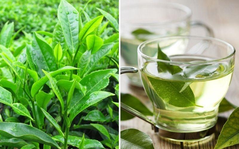 Công dụng của nước trà xanh