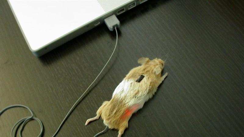 Hướng dẫn cách kiểm tra chuột chính xác
