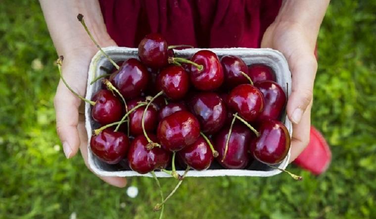 Cherry Mỹ là gì? Cách chọn cherry ngon?