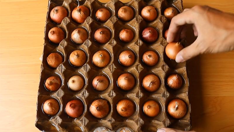 Đặt củ hành tím vào vỉ đựng trứng