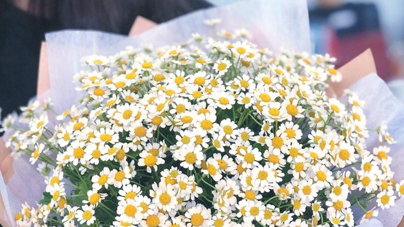 Mua hoa cúc dại ở đâu và giá bao nhiêu?