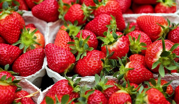 Chi tiết cách trồng và chăm sóc dâu tây tại nhà cho trái đỏ chín mọng
