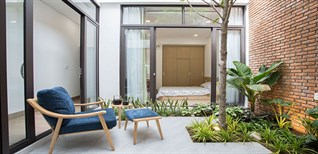 Top 5 loại cây thường trồng ở giếng trời giúp nhà luôn xanh mát, trong lành