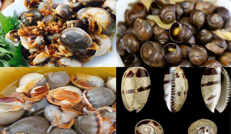 Danh sách các loại ốc biển, ốc nước ngọt và ốc độc tại Việt Nam
