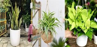 Top 9 loại cây trồng trong nhà không cần ánh sáng dễ tìm ở Việt Nam
