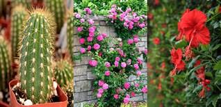 Top 10 loại cây trồng làm hàng rào vừa đẹp vừa chống trộm hiệu quả