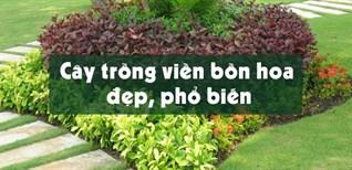 Top 12 cây trồng viền bồn hoa đẹp, phổ biến nhất hiện nay