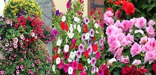 Top 14 loại hoa dễ trồng, nở quanh năm ai nhìn cũng thích