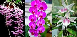 Top 18 loại hoa lan đẹp, dễ trồng nhất ở Việt Nam