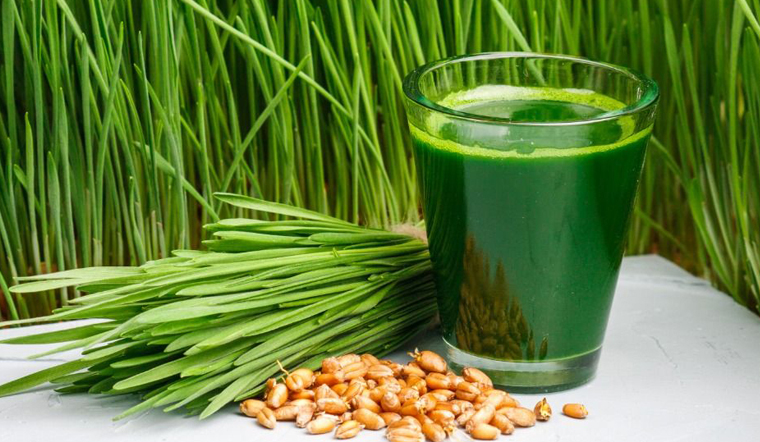 Cỏ lúa mì là gì? Tác dụng, cách dùng bột và nước ép cỏ lúa mì