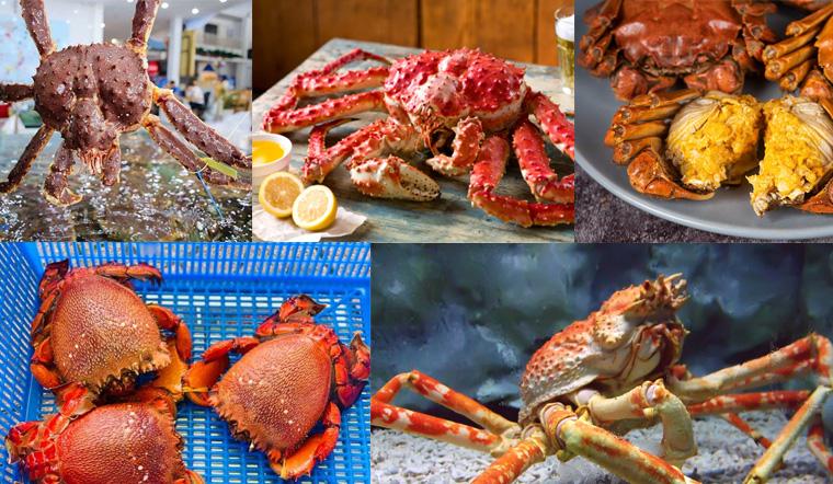 Tổng hợp tất cả các loại cua biển ăn được ngon, phổ biến nhất thế giới