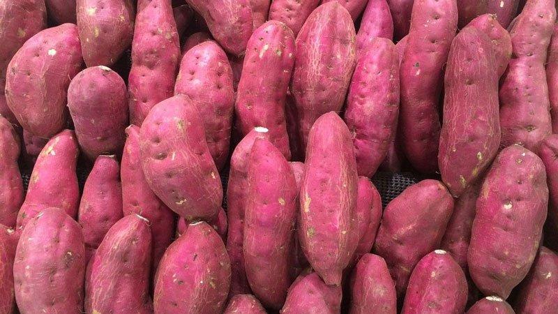 Trong khoai lang có chứa lượng lớn vitamin B5
