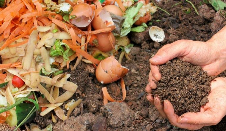 Cách ủ rác nhà bếp trồng rau sạch tại nhà lớn nhanh như thổi