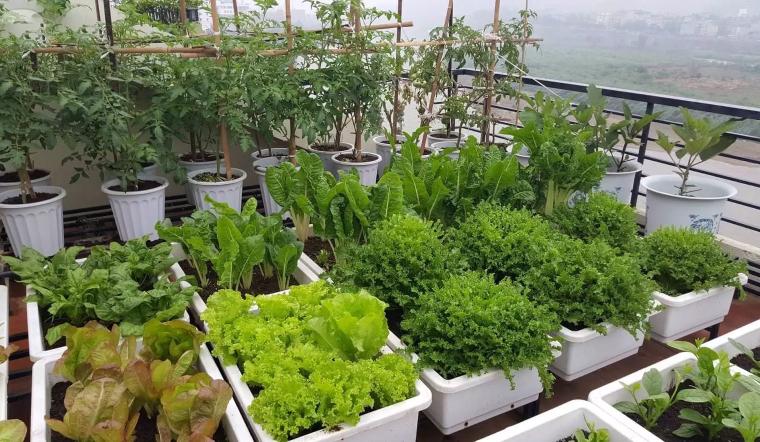 9 lưu ý quan trọng trước khi trồng rau sạch tại nhà mà bạn không nên bỏ qua