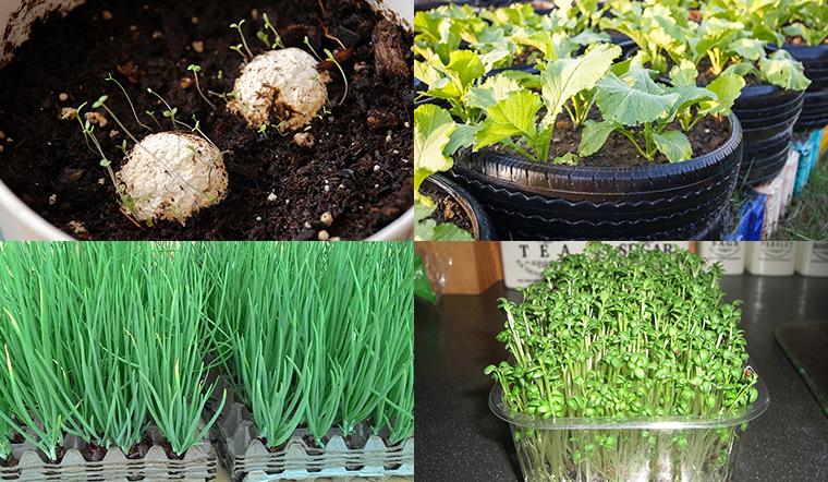 Tận dụng các đồ bỏ đi để trồng rau sạch tại nhà có ăn quanh năm
