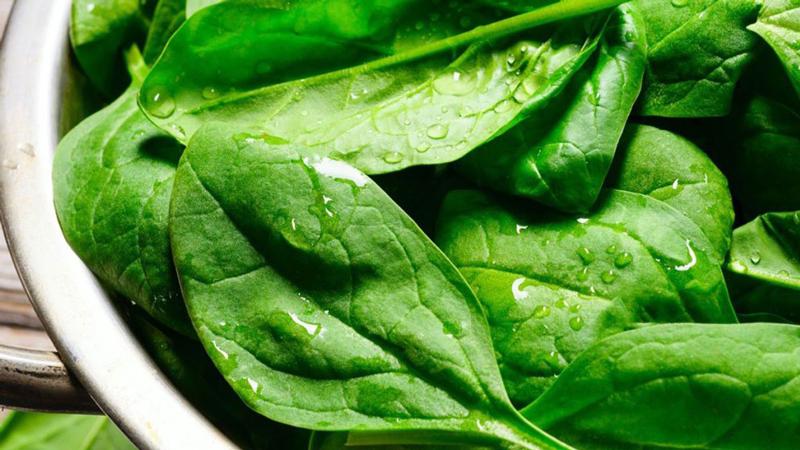 Rau bina là nguồn thực phẩm giàu vitamin K1