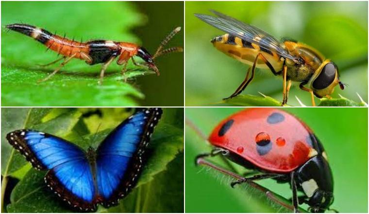 Bạn có biết: Loài côn trùng nào đốt đau nhất không?