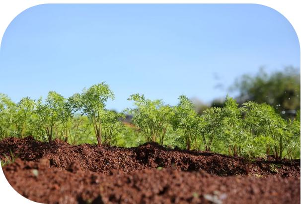 Nguyên liệu được trồng theo phương pháp hữu cơ