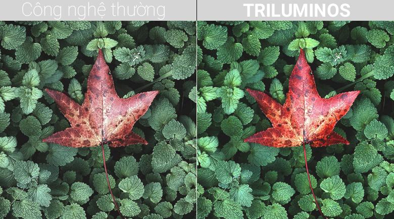 Công nghệ TRILUMINOS trên Android Tivi Sony 4K 49 inch KD-49X8500F/S