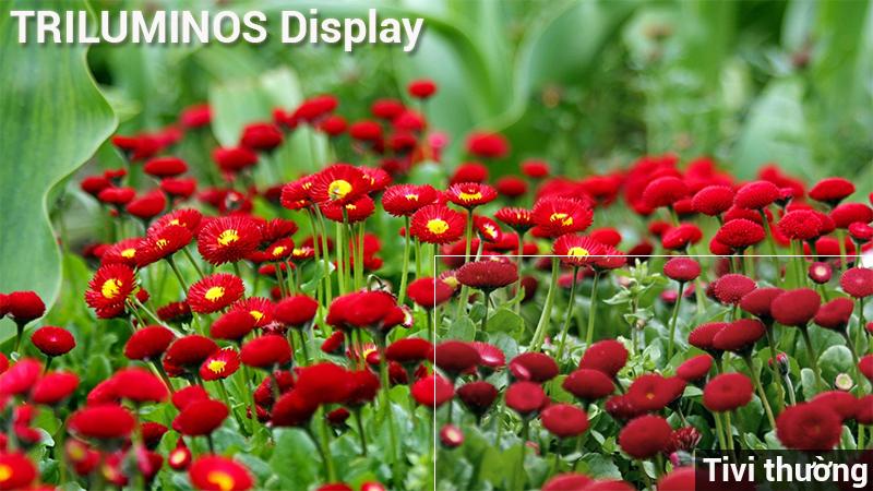 Công nghệ hình ảnh Trluminos trên Android Tivi Sony 4K 65 inch KD-65X9000F