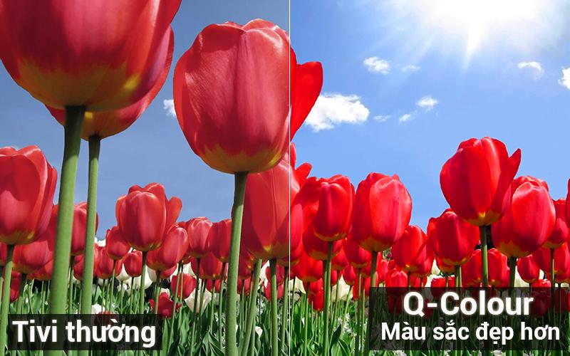 Công nghệ hình ảnh Q Colour