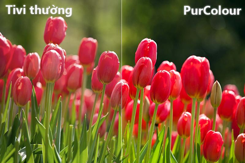 công nghệ PurClour Smart Tivi Cong Samsung 49 inch UA49NU7300