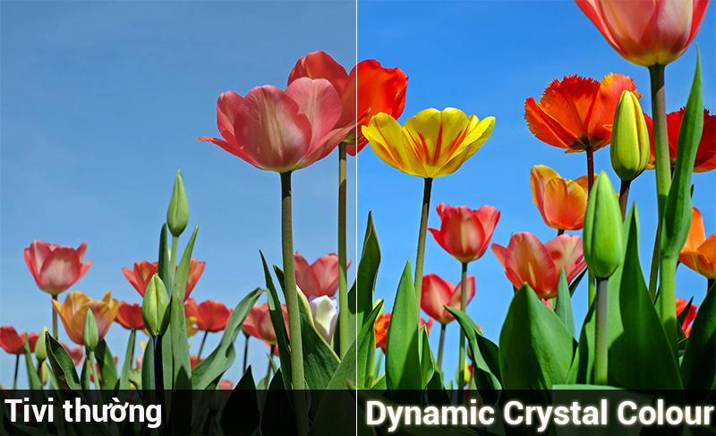 Công nghệ Dynamic Crystal Colour trên Smart Tivi Samsung 4K 43 inch UA43NU7800