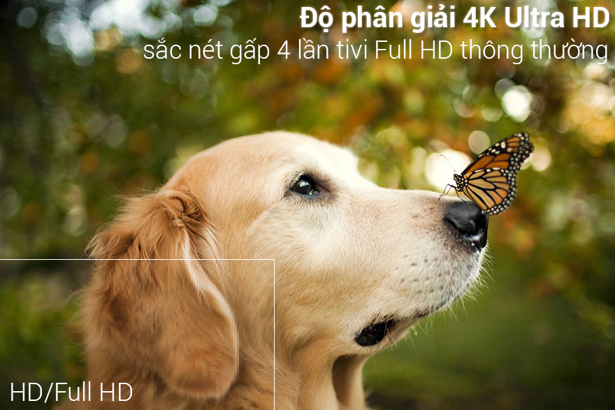 Độ phân giải 4K sắc nét trên Smart Tivi LG 4K 49 inch 49UK6340PTF