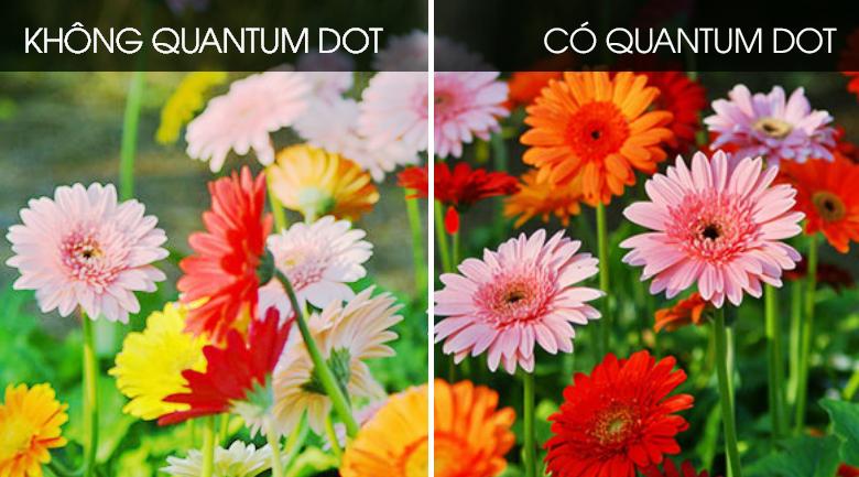quantum dot-Smart Tivi QLED Samsung 4K 65 inch QA65Q60T