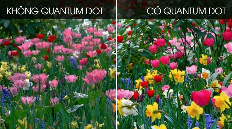 quantum dot-Smart Tivi QLED Samsung 4K 75 inch QA75Q60T