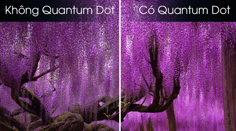 Quantum Dot-Smart Tivi QLED Samsung 8K 75 inch QA75Q800T